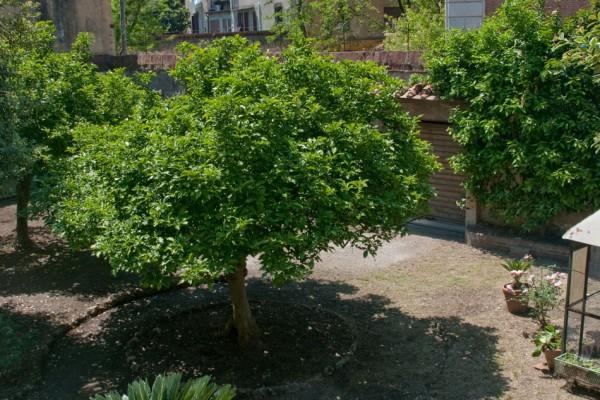 giardino-8